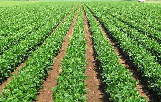 Calcium Carbonate Powder in Fertilisers and agricultural